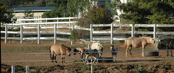 Horse property fences/real estate horse property