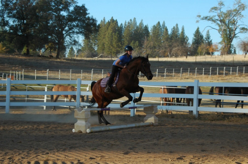 Horse property Arenas /horse property