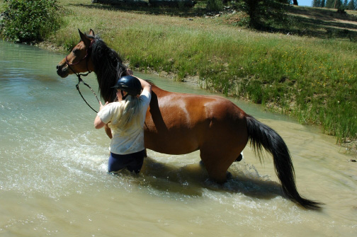 Horse Property Ponds/horse property