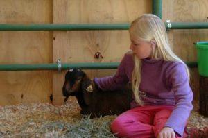 4H goat/