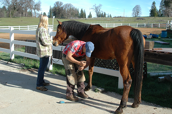 Finding Horse Property ranches/