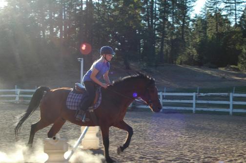 Horse property Arenas /horse property